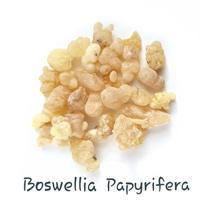 boswelia papyrifery