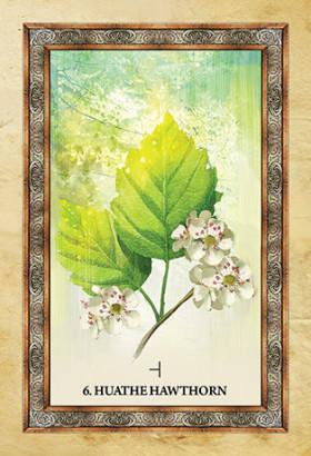 Karte Celtic Tree Oracle